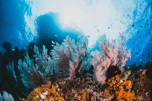 Coral e peixes em torno de sha'ab mahmud Foto gratuita