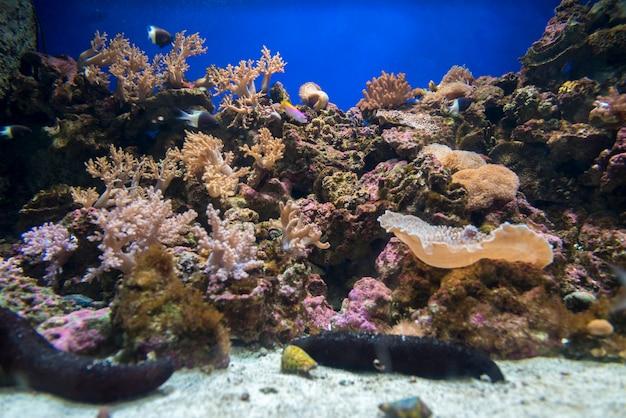 Coral no aquário, osaka japão Foto Premium