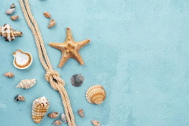 Corda náutica de vista superior com marisco Foto gratuita