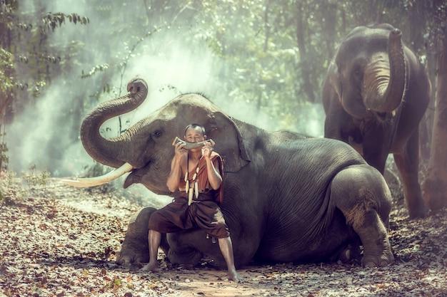 Cornaca sentado com um elefante e soprando chifres em uma floresta, surin, tailândia. Foto Premium