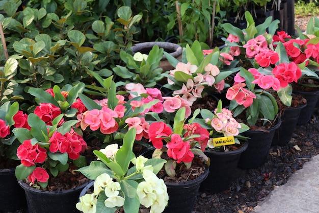 Coroa de flores de espinhos Foto Premium