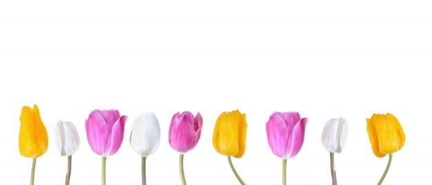Corola de tulipas coloridas Foto Premium
