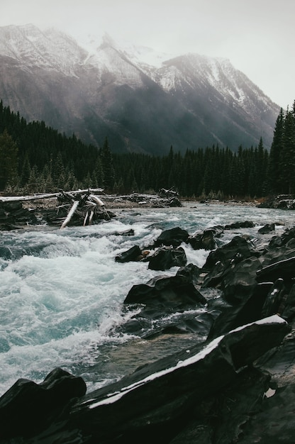 Córrego da montanha de fluxo rápido Foto gratuita