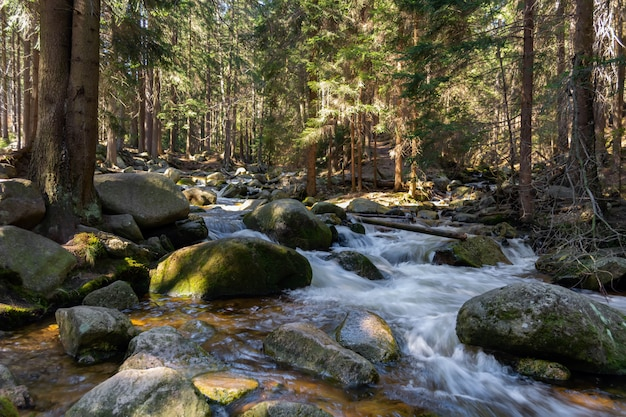 Córrego da montanha rochosa e árvores de goma Foto Premium
