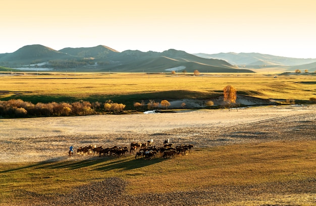 Correndo um grupo de cavalos Foto Premium