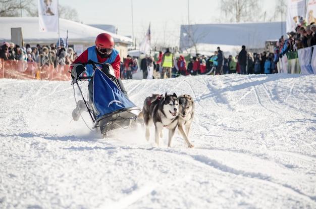Corrida de trenós puxados por cães. mulher, musher, e, husky, equipe trenó cão Foto Premium