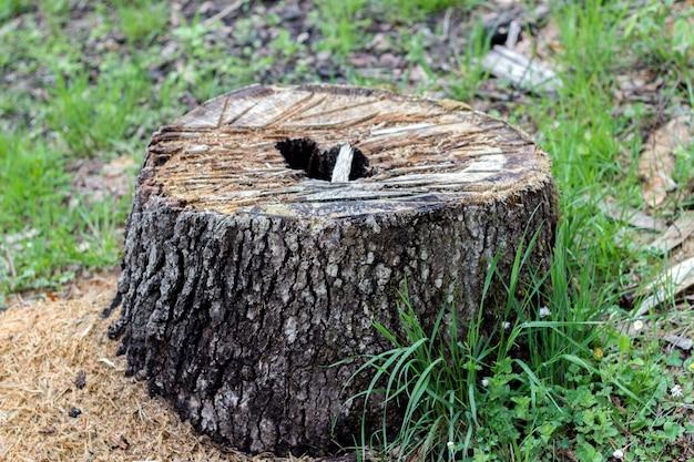 Corte a árvore na floresta, fotografada com profundidade muito rasa Foto Premium