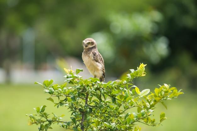 Coruja na árvore olhando de lado Foto Premium
