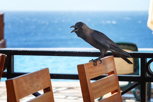 Corvo negro senta-se no encosto de uma cadeira Foto Premium