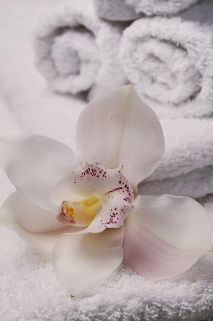 Cosmetologia e spa Foto gratuita