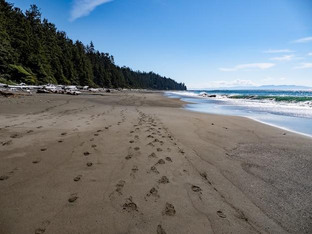 Costa da praia com árvores verdes e céu azul Foto gratuita