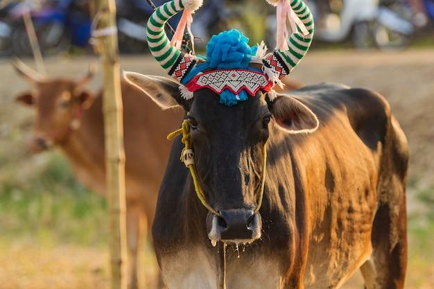 Cow decorou-o com um belo trabalho para participar da cerimônia. Foto Premium