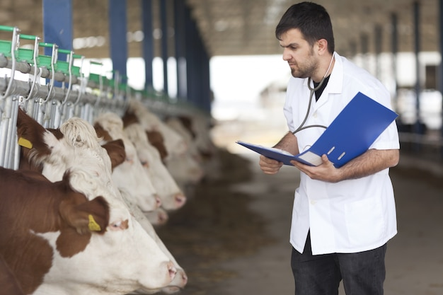 Cow veterinary Foto Premium