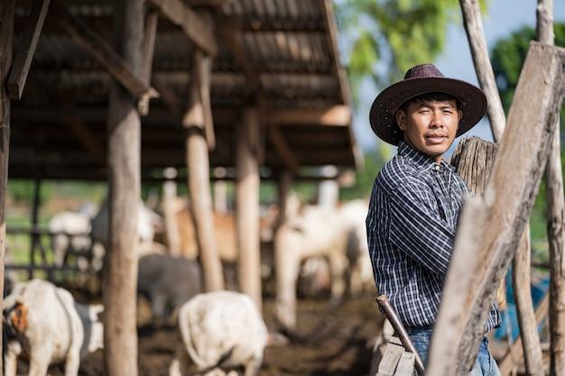 Cowman no estábulo e suas vacas Foto Premium