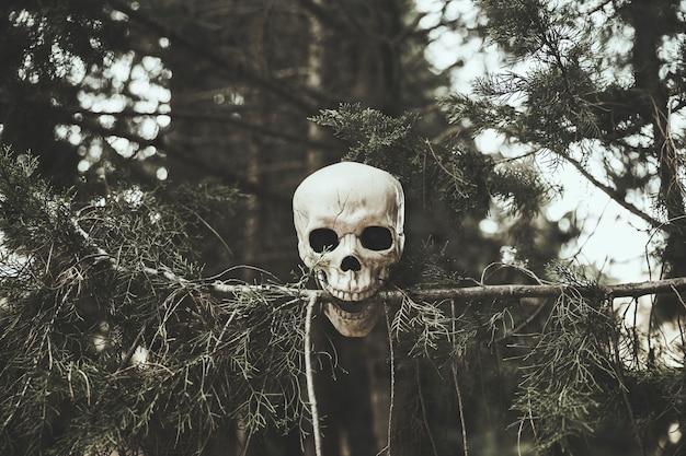 Crânio, arrancar o galho da árvore na floresta Foto gratuita