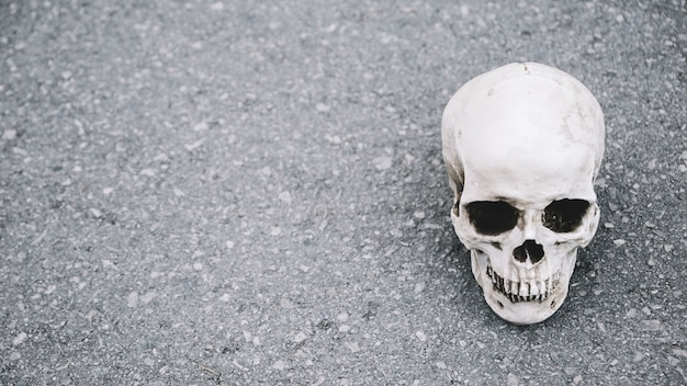 Crânio artificial do homem deitado no asfalto do lado Foto gratuita