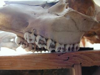 Crânio, escuro Foto gratuita