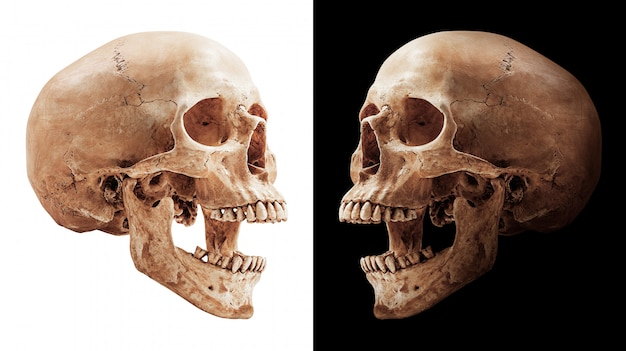 Crânio humano isolado Foto Premium