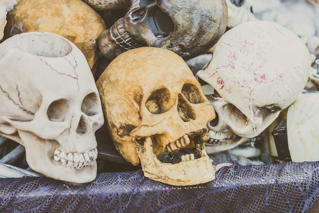 Crânio humano Foto gratuita