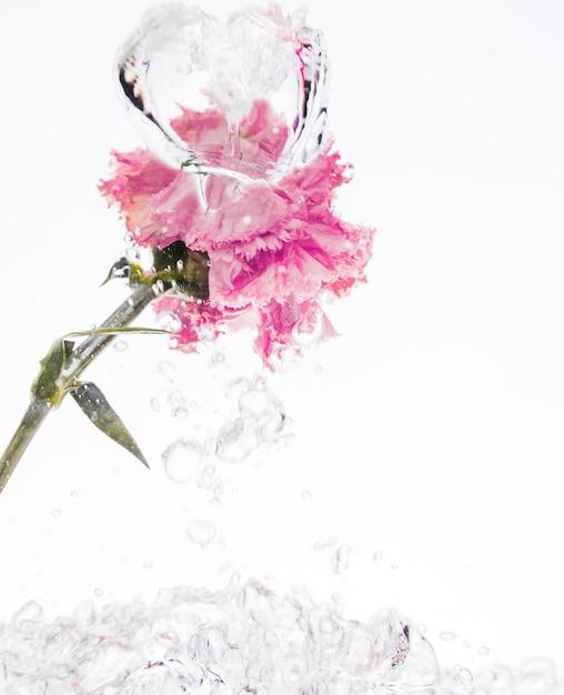 Cravo rosa cair na água Foto gratuita