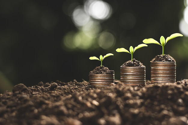 Crescimento financeiro, moedas e mudas. Foto Premium