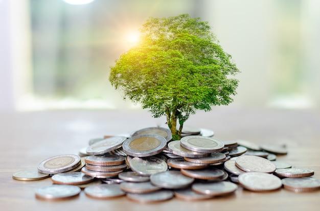 Crescimento monetário economizar dinheiro Foto Premium