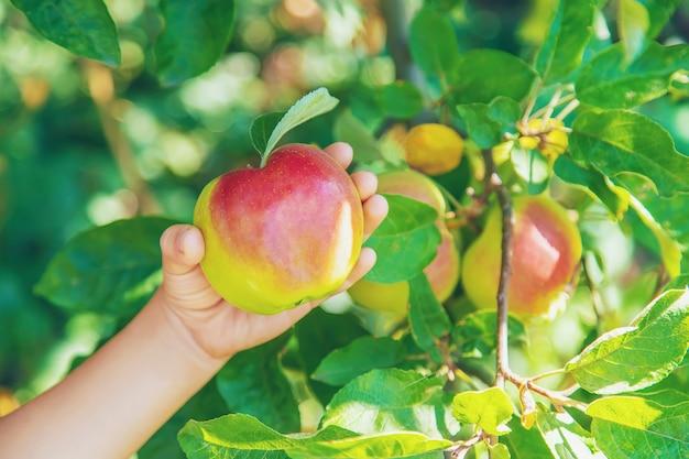 Criança com uma maçã no jardim Foto Premium