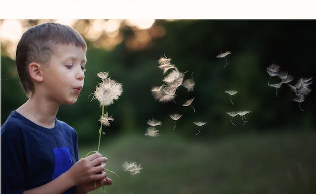 Criança do retrato ao ar livre na natureza que funde um dente-de-leão na noite ensolarada do verão. Foto Premium