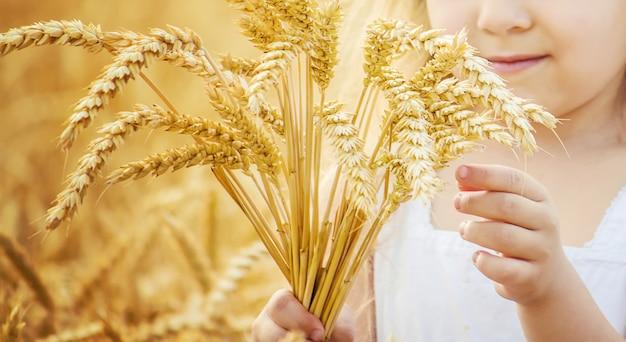 Criança em um campo de trigo. foto. Foto Premium