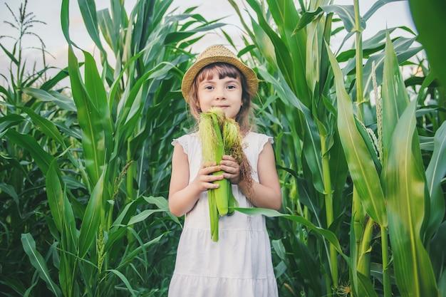 Criança no campo de milho. um pequeno agricultor. foco seletivo. Foto Premium