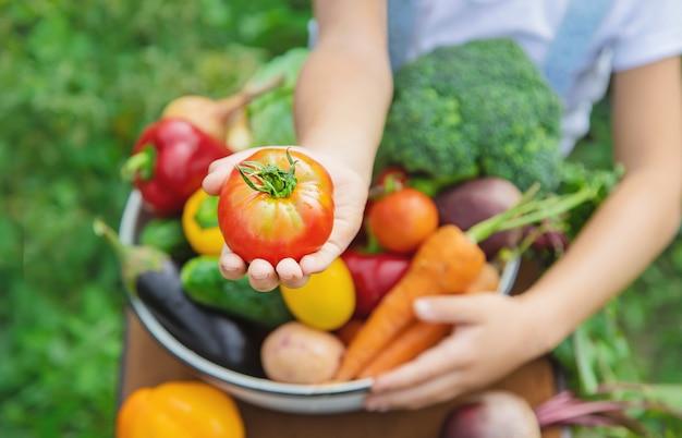 Criança no jardim com legumes nas mãos dele. Foto Premium