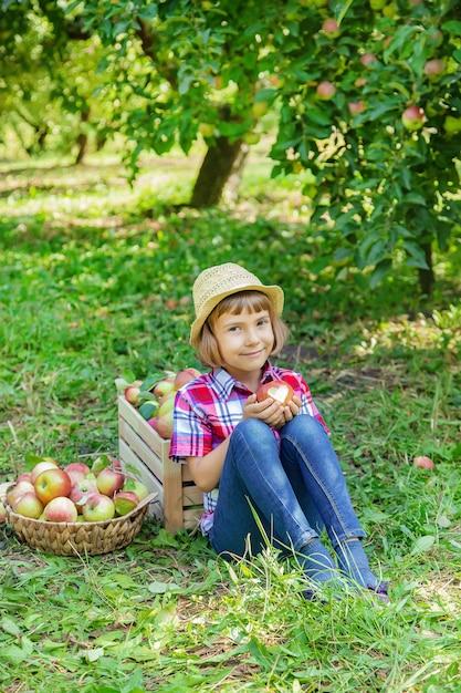 Criança pega maçãs no jardim no jardim Foto Premium