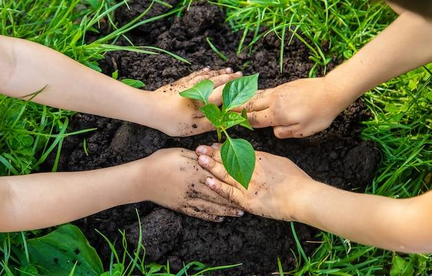 Crianças plantar plantas no jardim Foto Premium