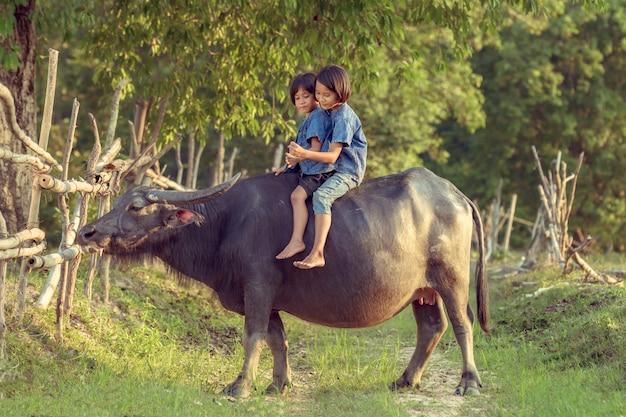 Crianças tailandesas do fazendeiro que jogam junto ao montar um búfalo. Foto Premium