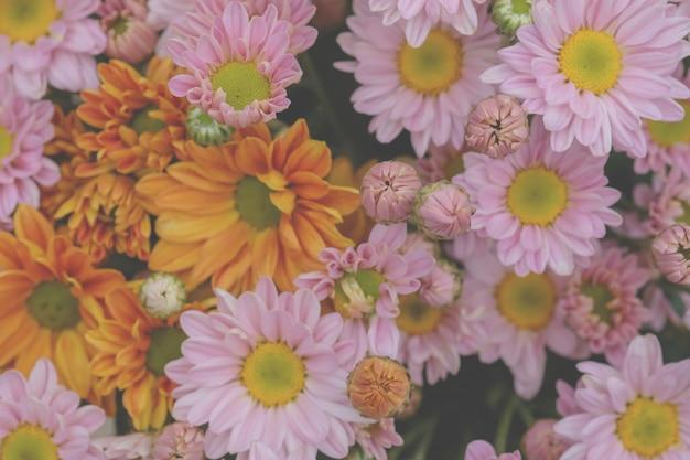 Crisântemo de flores coloridas feito com gradiente de fundo Foto Premium
