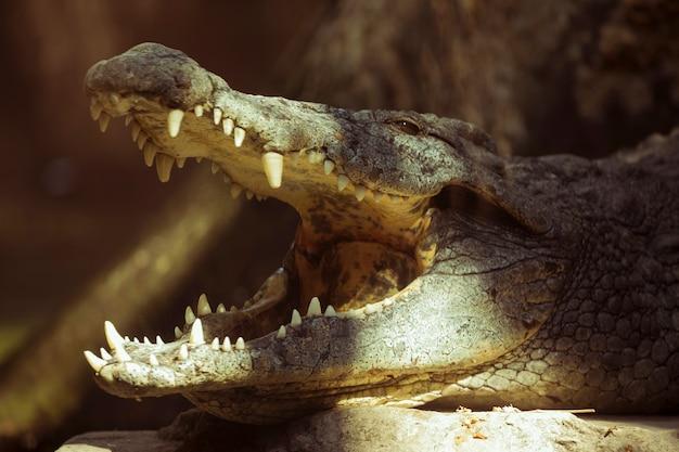 Crocodilo Foto gratuita
