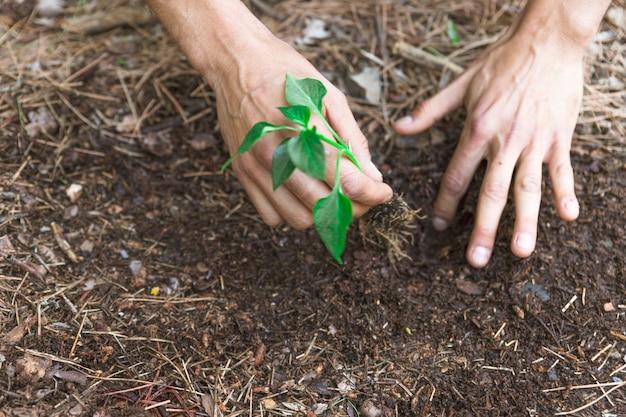 Crop mãos plantng brotam na sujeira Foto gratuita