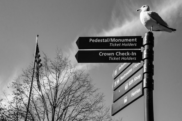 Cruzando caminhos com um descanso gaivota no poste Foto gratuita
