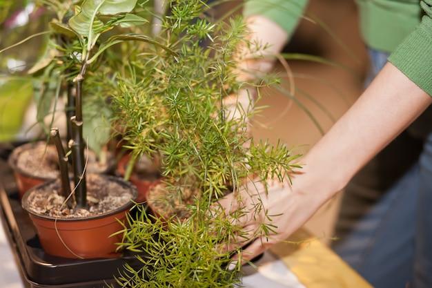 Cuidar de plantas de casa. conceito de horta. Novos comportamentos. Mudança de comportamento. Horta em casa. Nova consciência. Planeta pedindo ajuda.