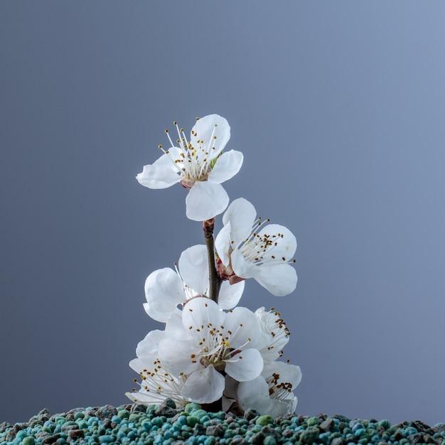 Cultivo de fertilizantes minerais. conceito Foto Premium