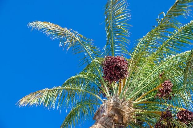 Data palmeiras contra o céu Foto Premium
