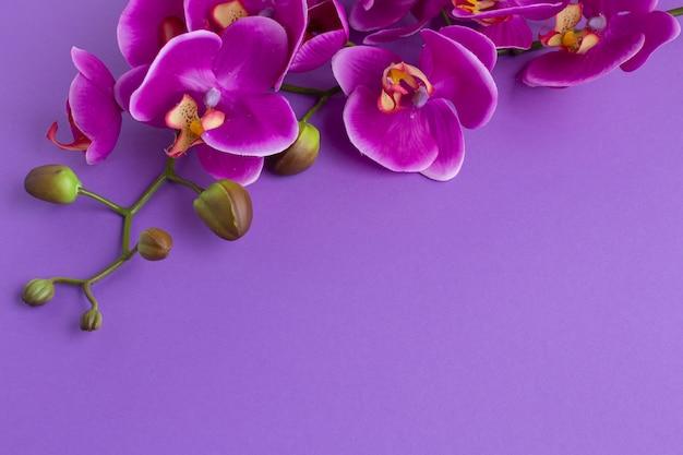 De cabeça para baixo cópia espaço plano de fundo com orquídeas Foto gratuita