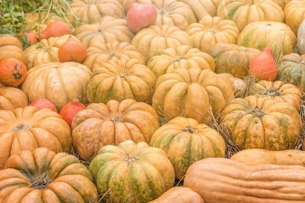 Decoração de outono de halloween de abóboras. conceito de mercado rural. Foto Premium