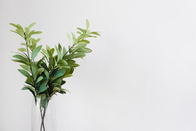 Decoração de planta close-up em vaso de vidro Foto gratuita
