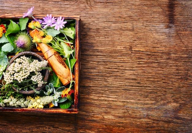 Definir ervas curativas Foto Premium