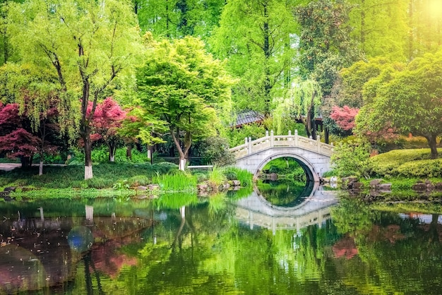 Deixe a mudança de cor vermelha no parque do templo do japão no outono do japão Foto Premium