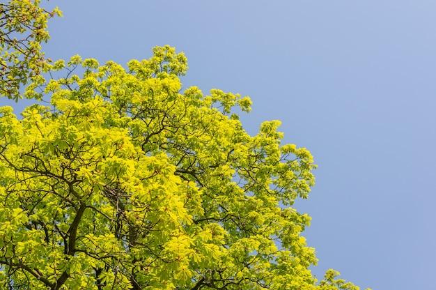 Densas folhas verdes no topo da árvore com o céu Foto gratuita