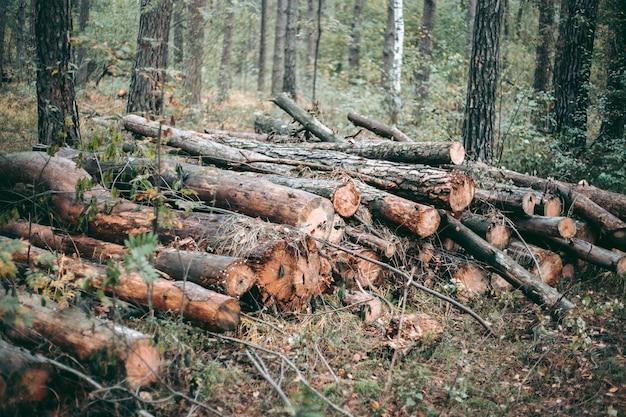Derrubada ilegal de floresta e árvores em um parque de vida selvagem Foto Premium