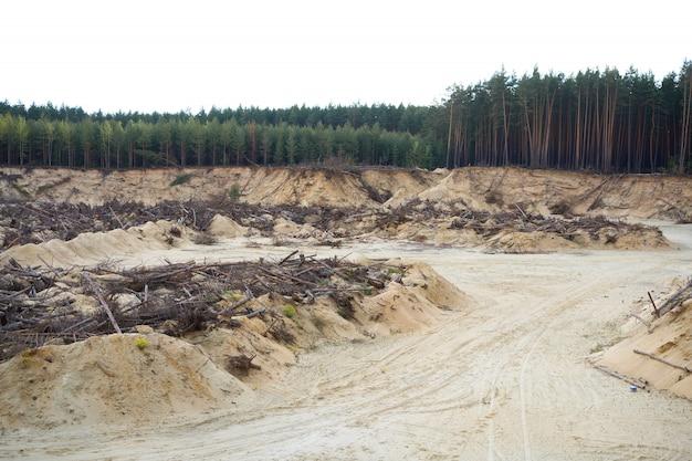 Desastre florestal desastre Foto Premium