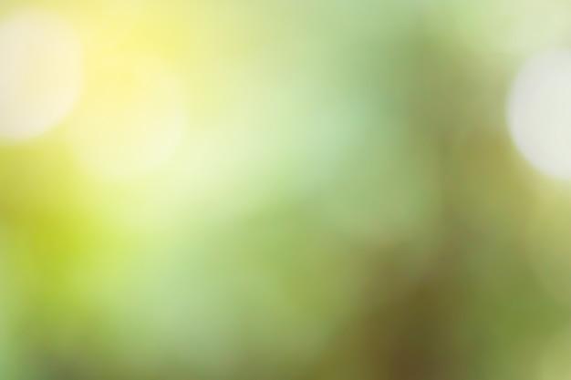 Desfocado de fundo verde natural para o projeto. Foto Premium